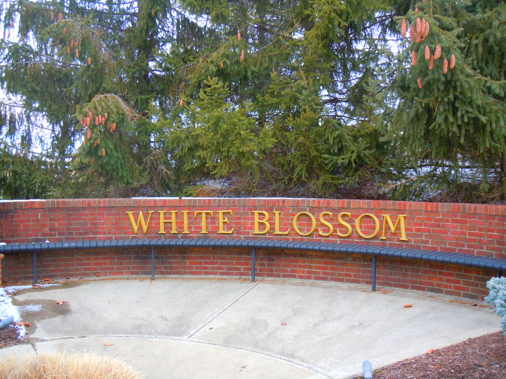 White Blossom Mason OH